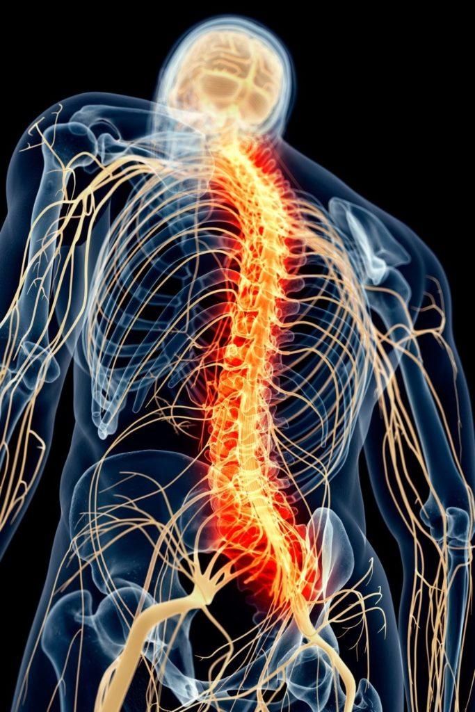 nervio vago 1 683x1024 - El nervio vago y su importancia en el sistema nervioso